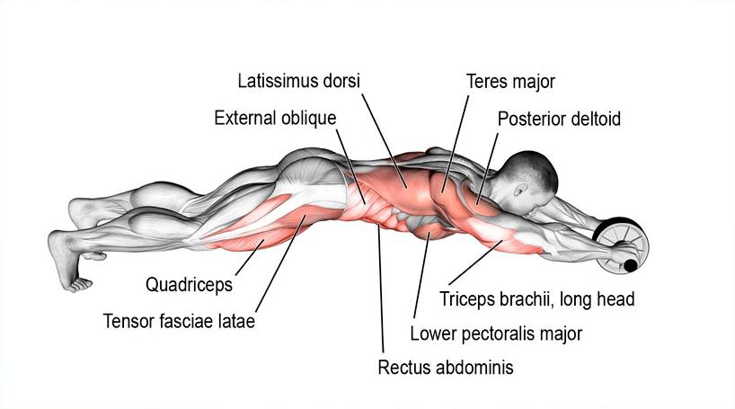 mihin lihaksiin voimapyörä ottaa